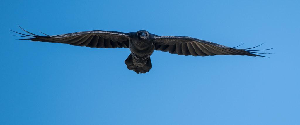 Raven_22