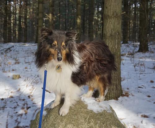 Introspective Jasper