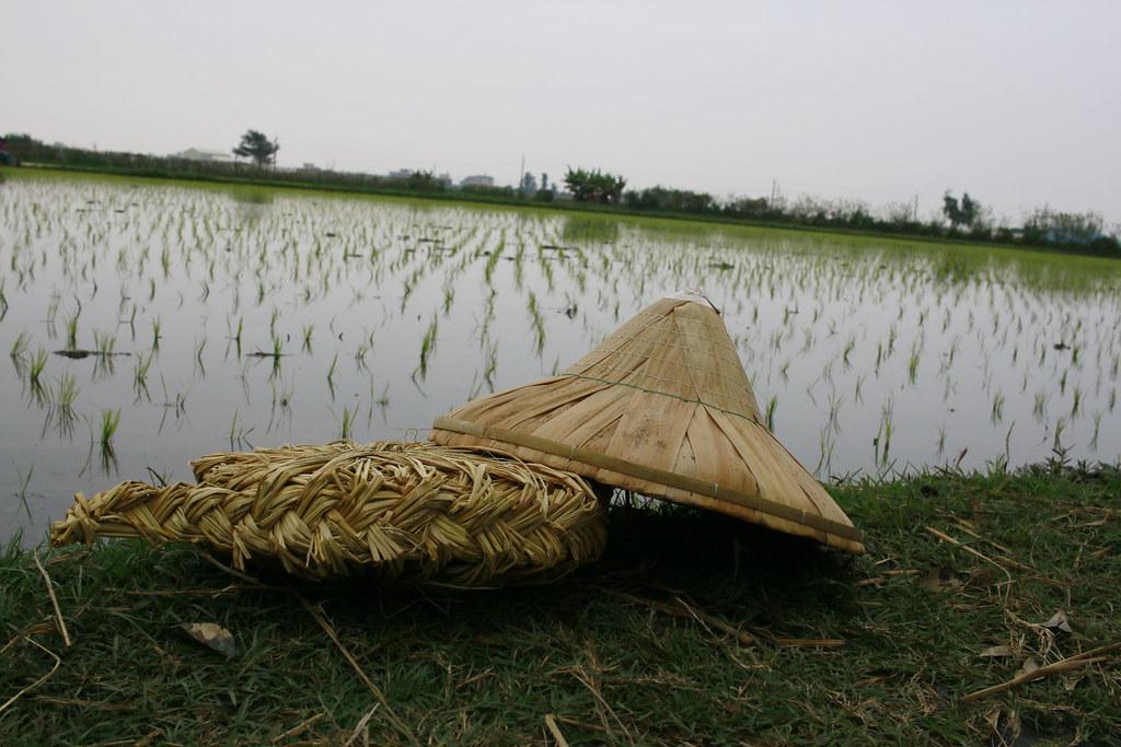 稻草 (8)