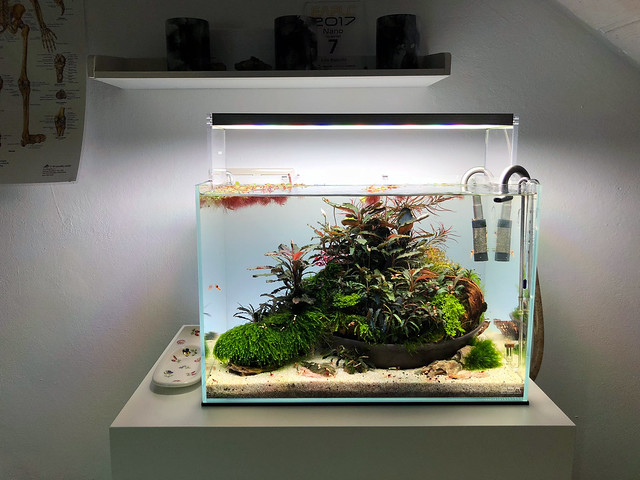 The Red Cliff Rescape