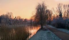 Park Kępa Potocka o świcie