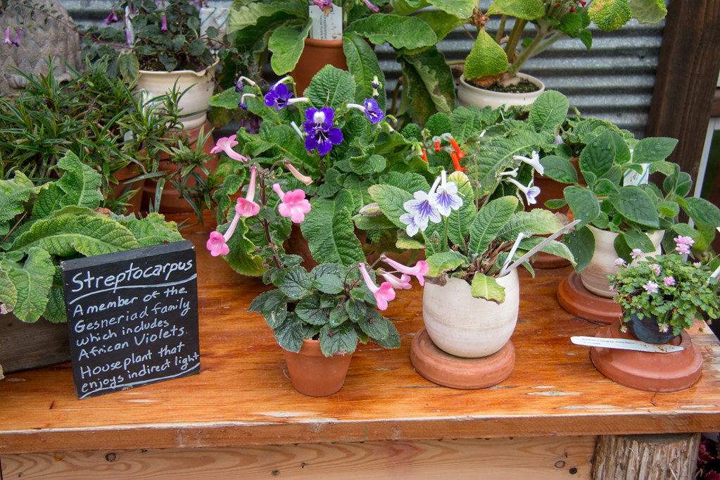 Potted flowers at the Gardener's Show House area