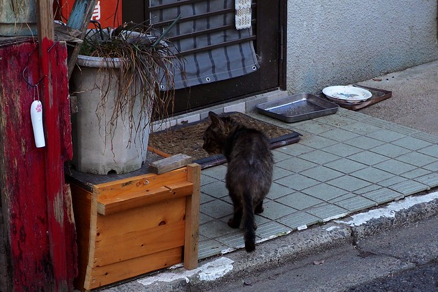 Today's Cat@2018-02-25