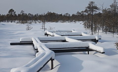 The OTC dry site under snow