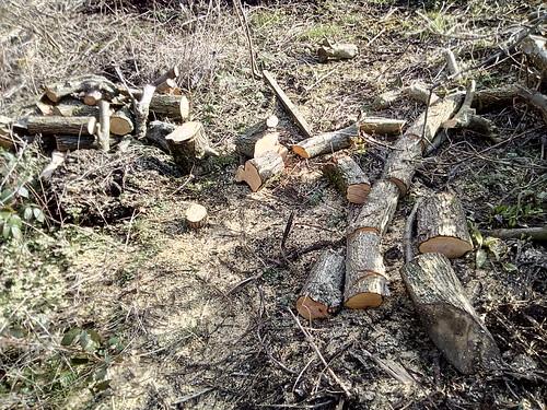 logs Feb 18 3