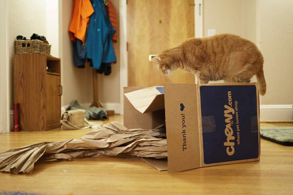 Our cat Sam stands on top of a cardboard box