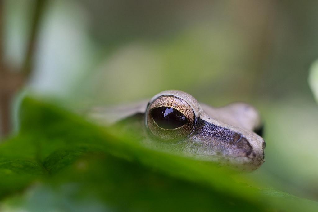 A peek from amphibian eye