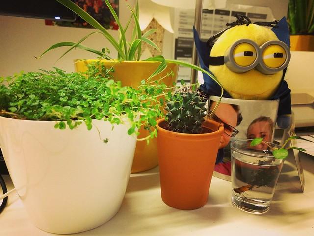 plantjes op kantoor