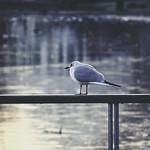 2018:02:08 17:04:50 - Bird Bokeh