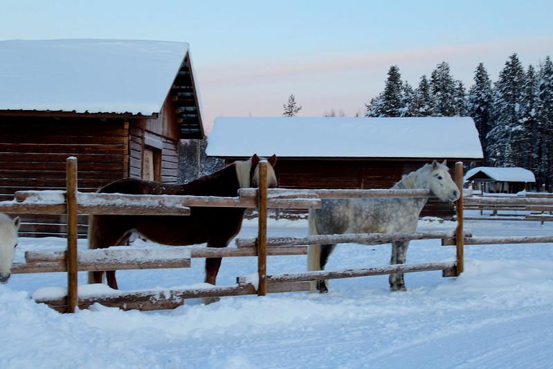 ylläs blogi kotijänkhän kotieläintila