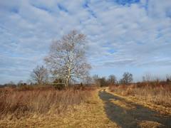 blue sky reprieve