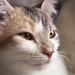 Cat pride