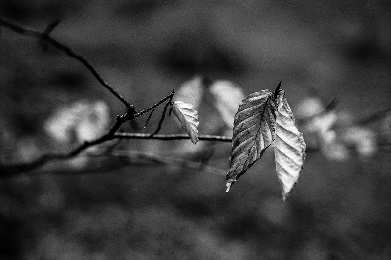 FILM - What remains of autumn?