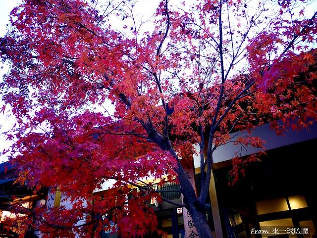 八阪神社29