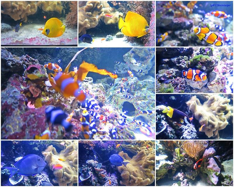 SEALIFELondon Aquarium-KLOOK客路-17docintaipei (17)
