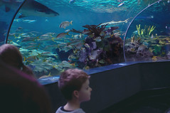 01.05.2018 Ripley's Aquarium of the Smokies