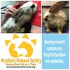 Wet & injured #bunny #rabbit dumped at #pet store. At our exotic #vet & we need #donations ASAP. PayPal #donation button on website: http://www.acadianahumane.org