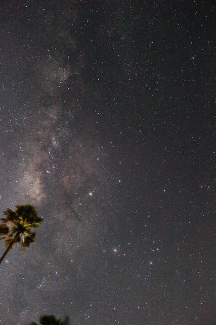 Milky Way Palm