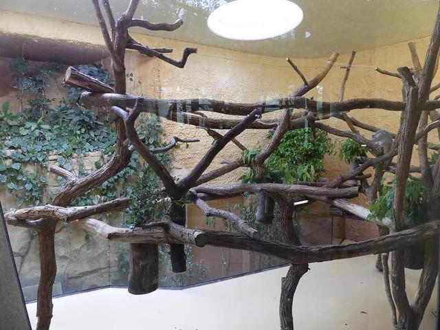 Koalagehege, Zoo Dresden