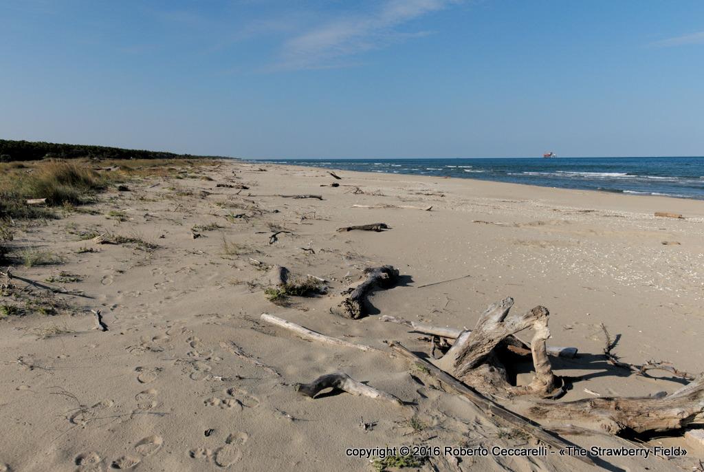 La spiaggia nei pressi della foce del Bevano