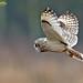 Close to the owl (Medium)