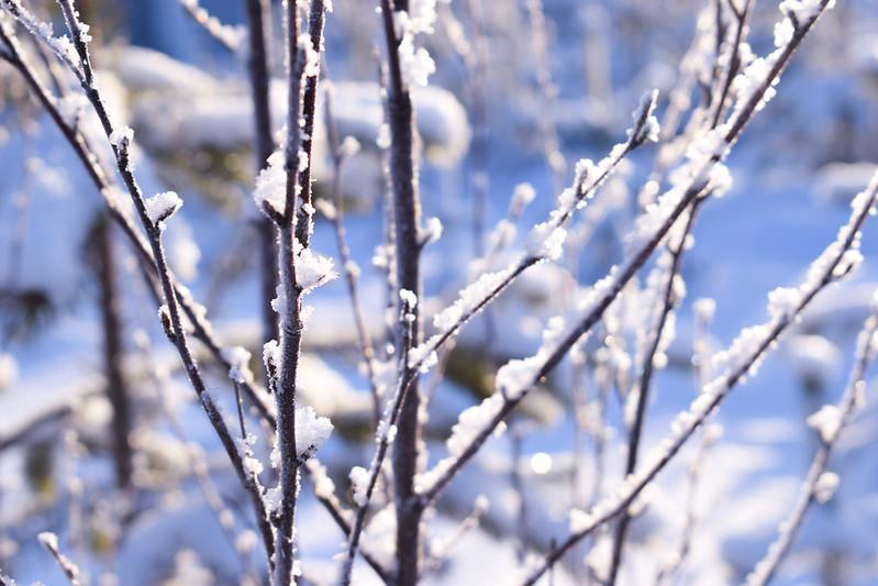 suomen luonto talvella5