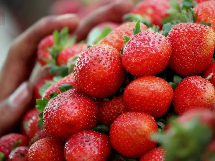 Strawberries for sale at Mahabaleshwar, a hill station on the west coast of India. Photo taken on May 22, 2015.