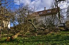 Irisvej 15 (fra nordvest, væltede træer) - DSC_4956_7_8_Balancer