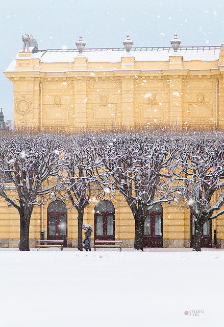 blizzard treegonometry