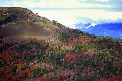 Cordillera de las Raices 2