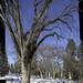 The Big Tree (manipulated)