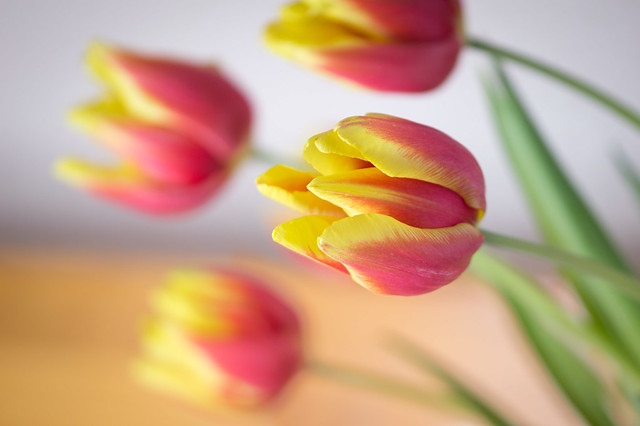 a vase of tulips to warm the soul