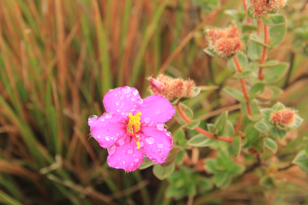 Raindrops on a pretty little pink flower