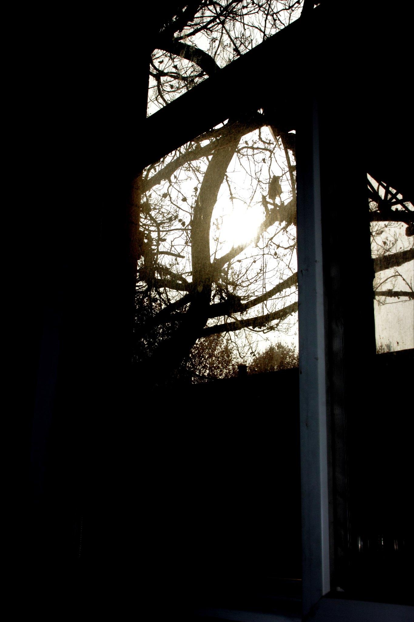 IMG_0136 Twilight (2)