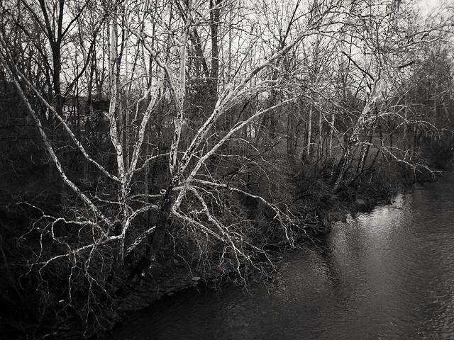 Sycamore near Sycamore Township., Panasonic DMC-G5, LUMIX G 20/F1.7 II