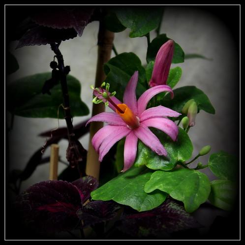 couleurs d'hiver au jardin  39510601004_a1ec38a6cf