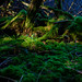 Small photo of Mossy Glade