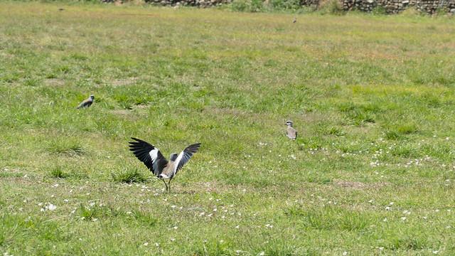 Vogel beim Wegfliegen