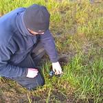 Nest monitoring 2 RSPB 2017