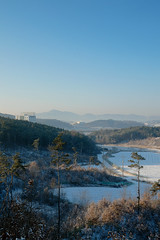 Winter woodlands in Cheonan