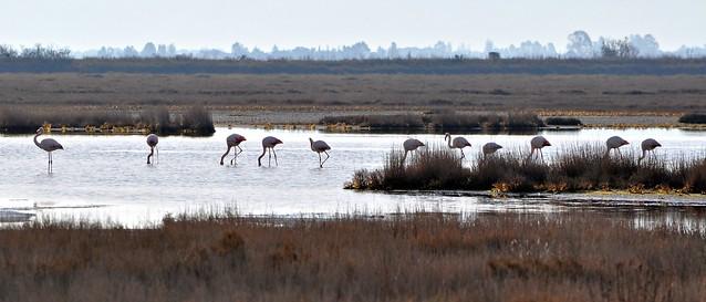 Fenicotteri - Flamingos