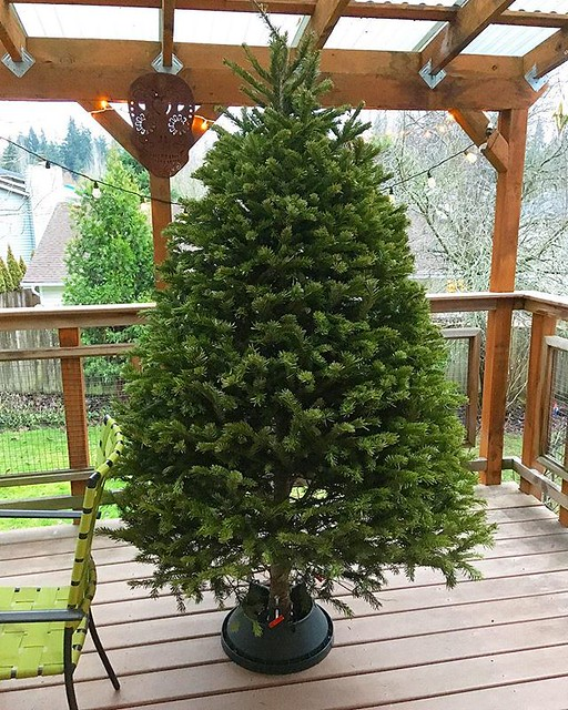 We had to take down our Christmas tree a week ago for the baby's birthday party. It still looks so good that I'm sad it's outside. It's the prettiest tree we've ever had and it was 50$ from a hardware store. 🌲