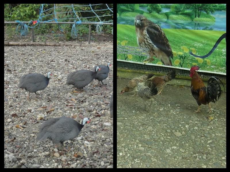 Papa Kit's aviary