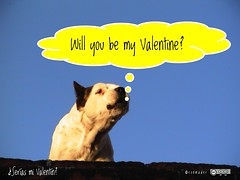 Will you be my Valentine? #roofdog