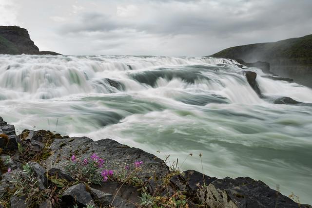 The Purple Flower - Gullfoss