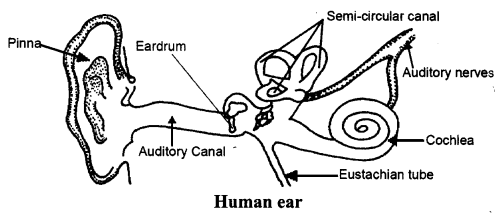 ncert-solutions-for-class-8-science-sound-1