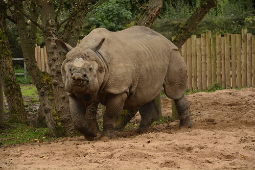 Chester Zoo (933)