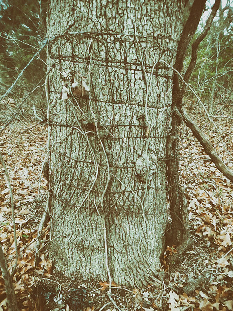 Turkey Mountain Barbed Wire_