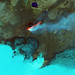 Roiling Flows on Holuhraun Lava Field by NASA Goddard Photo and Video