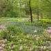 Chanticleer Estate & Gardens (411) by Framemaker 2014